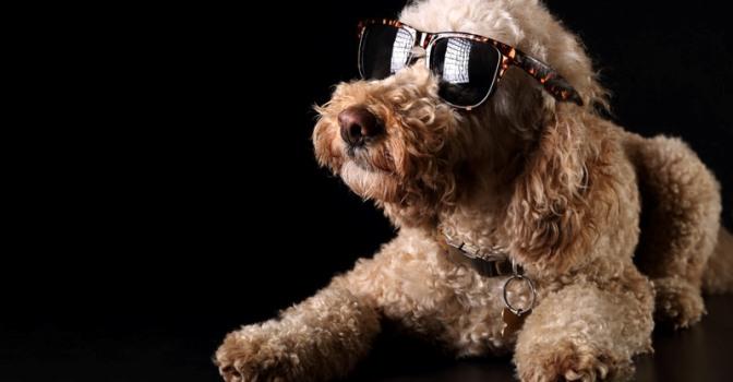 doglasses